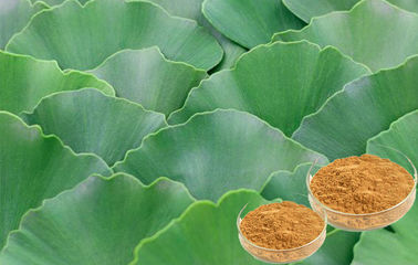 Pharmaceutical Ginkgo Biloba Leaf Extract For Helping Improve Memory CHP