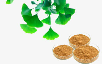 Water Soluble Pure Ginkgo Extract For Improving Mental Performance