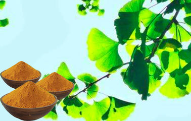 Water Soluble Ginkgo Leaf Extract , Brownish Yellow Ginkgo Biloba Powder