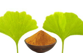 Water Soluble Natural Pure Ginkgo Biloba Extract GACP Raw Material