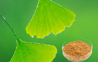 Natural Ginkgo Biloba Leaf Extract For Improving Mental Performance CHP2015