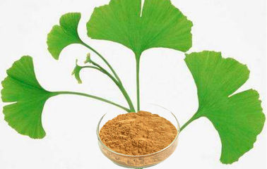 High Purity Ginkgo Biloba Extract Powder With Low Pesticide Residue