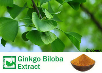 Pure Natural Botanical Ginkgo Extracts With Advanced Extraction Technology